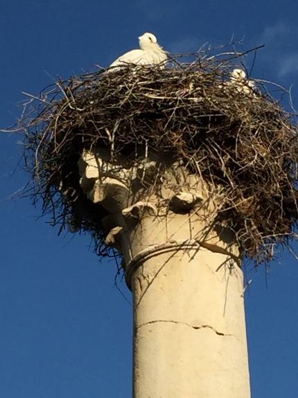 Volubilis: storks
