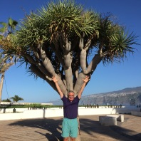 Dragon Tree, Canary Islands