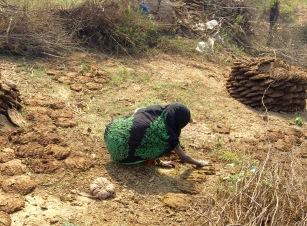 Woman Making Cow-Pie Fuel