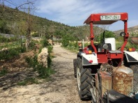 Palestinian Farm Scene