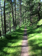 Bike Path through tall pine forest, Rhyader Dams